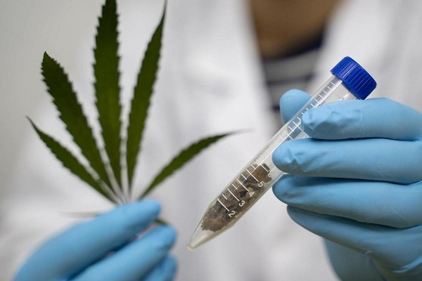ONU certifica uso medicinal de la mariguana
